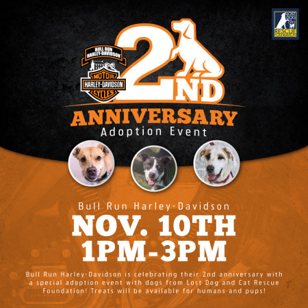 Anniversary Adoption Event